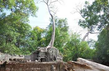 Angkor Wat photo №18