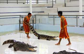 Crocodile farm in Phuket photo №18