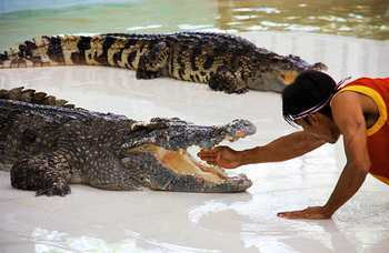 Crocodile farm in Phuket photo №19