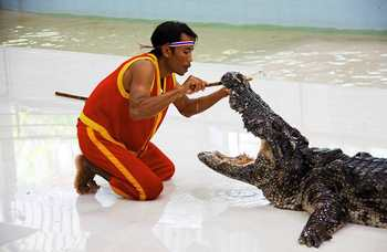 Crocodile farm in Phuket photo №20