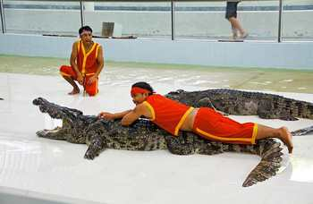 Crocodile farm in Phuket photo №21