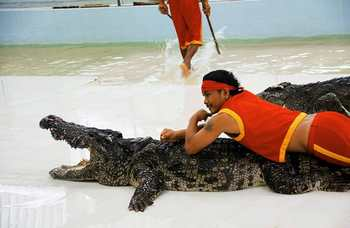 Crocodile farm in Phuket photo №22