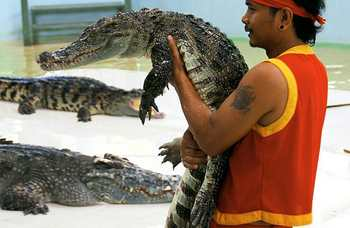 Crocodile farm in Phuket photo №23