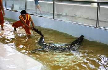 Crocodile farm in Phuket photo №24