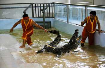 Crocodile farm in Phuket photo №26