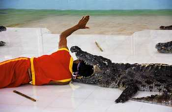 Crocodile farm in Phuket photo №27