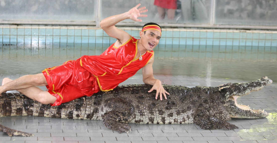 Video about Crocodile farm