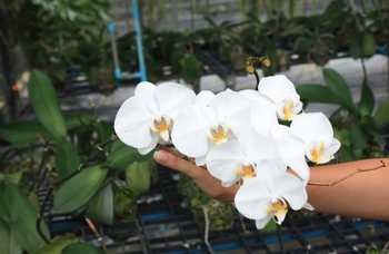 Excursion to Orchid Garden, Phuket photo №10