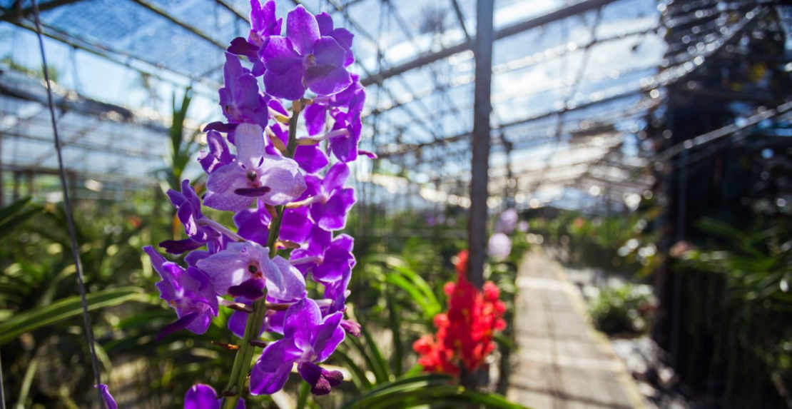 Video about Orchid Garden
