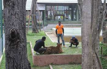 Tiger Kingdom on Phuket photo №14