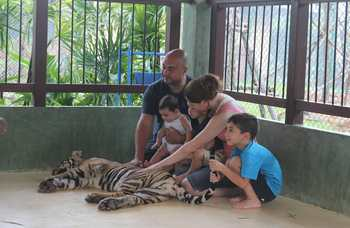 Tiger Kingdom on Phuket photo №5