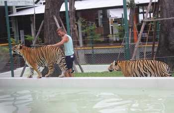 Tiger Kingdom on Phuket photo №8
