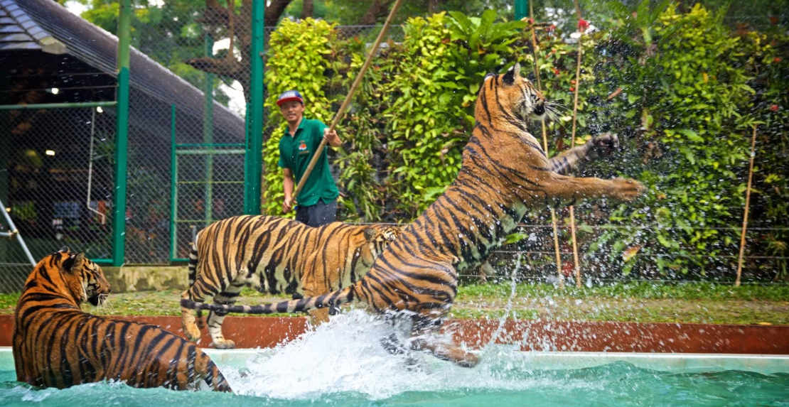 Video about Tiger Kingdom on Phuket